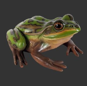 H-100003 Green and Golden Bell Frog - Kikker