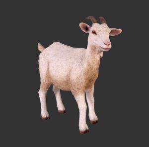 H-100044 Goat - Geit
