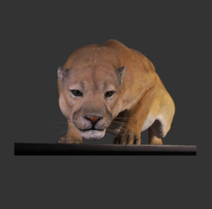 H-100046 Cougar - Poema