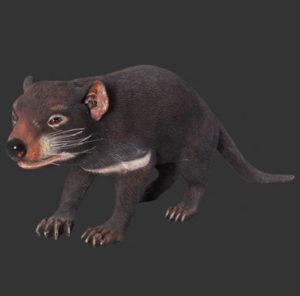 H-100049 Tasmanian Devil - Tasmaanse Duivel