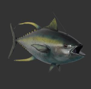 H-100076 Yellowfin Tuna - Tonijn