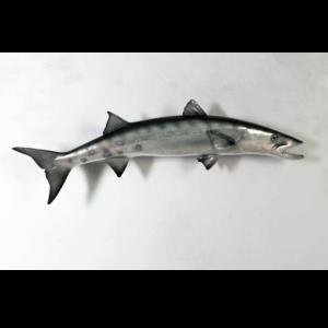 H-100077 Barracuda