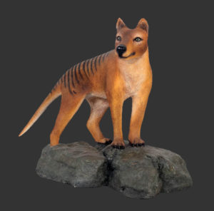 H-100101 Tasmanian Tiger - Tasmaanse Tijger