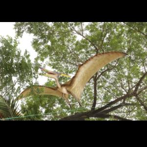 H-120010 Giant Pteranodon - Dinosaurus