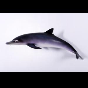 H-120062 Dolphin - Dolfijn