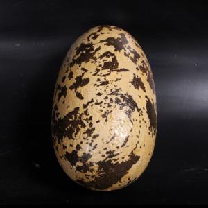 "H-140030 Theropod Egg 9"" - Dinosaurus"
