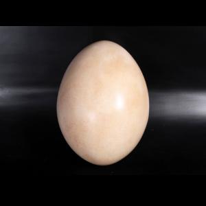H-140033 Sauropod Egg - Dinosaurus