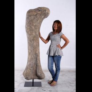 H-140058 Apatosaurus Femur Fossil - Dinosaurus