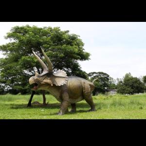 H-140098 Giant Triceratops - Dinosaurus
