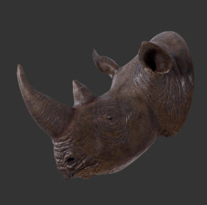 H-140052 Rhinoceros Head - Neushoorn
