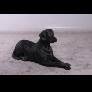 H-150251 Labrador Black Lying Down