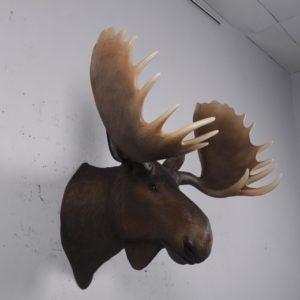 H-180023 Moose Head - Eland