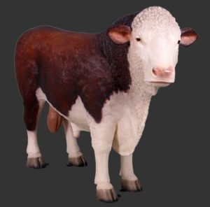 H-160034 Hereford Bull - Stier