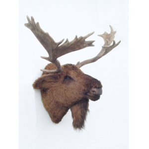 2076 Moose Head - Eland