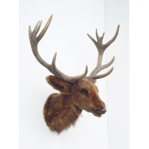 2097 Reindeer Head - Rendier