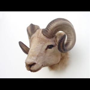 2109 Ram Head - Ram