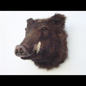 2115 Wild Boar Head - Wild Zwijn