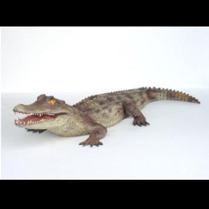 2212 Kaiman Alligator 6.5 feet - Krokodil