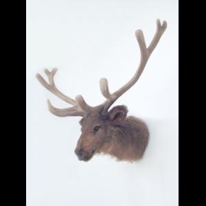 2230 Elk Head - Eland