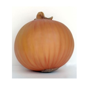 2529 Onion - Ui - 49 cm