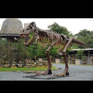 2602 T-Rex Skeleton - Dinosaurus Skelet