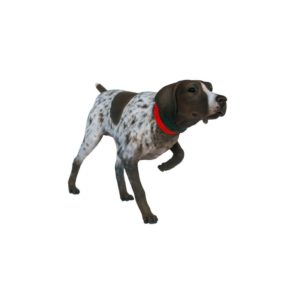 2990 German Short Haired Pointer Dog