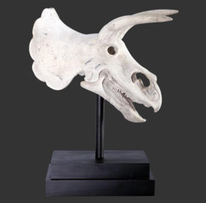 H-80046 Triceratops Skull on Base - Dinosaurus