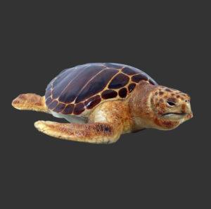 H-90048 Loggerhead Turtle - Schildpad