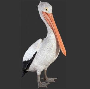 H-90073 Pelican Standing - Pelikaan