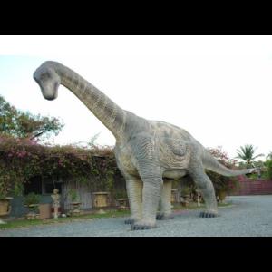 EC Dinosaurs Camarasaurus  - Dinosaurus