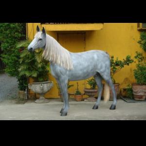 MC Appaloosa Horse - Paard