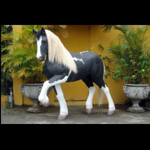MI Piebald Horse - Paard