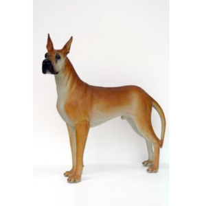 DV Great Dane - Deense Dog
