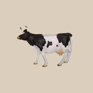 Koeien - Kalfjes