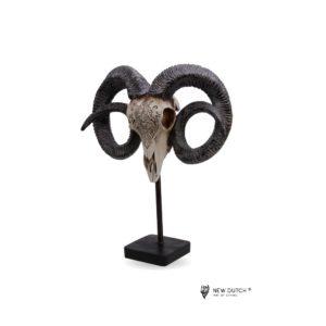 600823 - Animal skull - 47x30x13cm