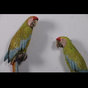 H-190152 Buffons Macaws - Papegaai - set 2
